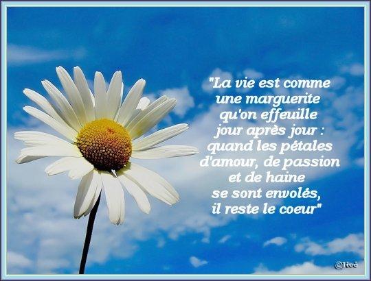 fleurjice.jpg